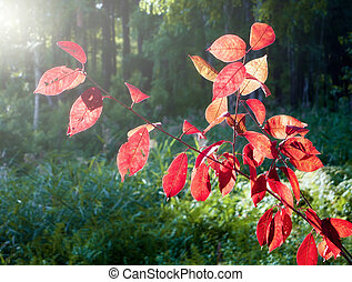 Red leaves on a background of green