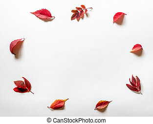 Red leaves on a white background. Autumn.