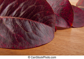 red leaves on a wooden background