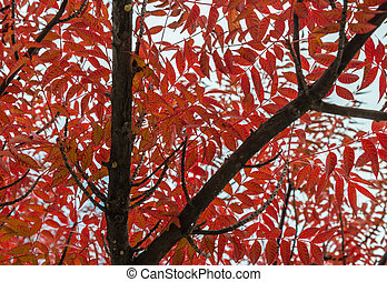 Red leaves on the branch tree with cloudy sky in low light style