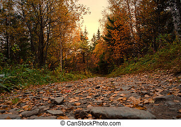 red leaves on the road in the autumn forest at sunset