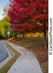 Red Leaves on Tree in Suburban Neighborhood