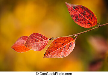 Red autumn leaves with copy space