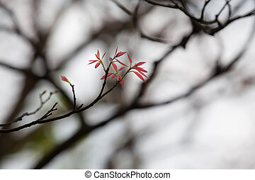 Small red leaves at a twig of a tree