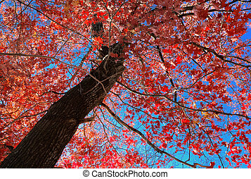 Red leaves tree potrait in autumn