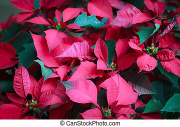 Red leaves, trimmed with green leaves.