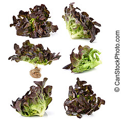 red lettuce leaves isolated on white