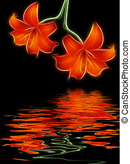 red lilie and water reflection - Two red lilies and water...