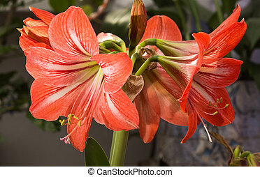 red Lilies. a heraldic fleur-de-lis. A vibrant spray of two...