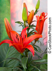 red lily flower in a garden