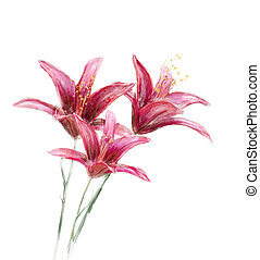 Red Lily Flowers watercolor