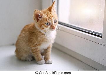 red little kitten on window sill