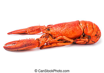 Red lobster isolated on white - Red freshness lobster...