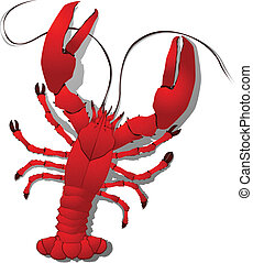 Red lobster detailed illustration, isolated objects on white background