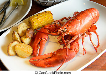 Roasted live maine red lobster served on plate