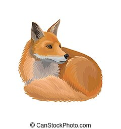 Red lying fox wild northern forest animal vector...