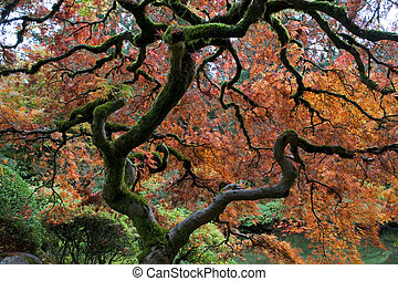 Red maple, Japanese garden