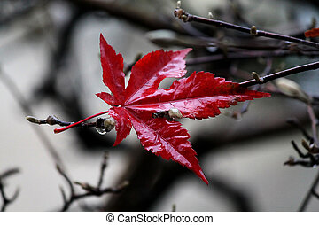 Red Maple Leaf 2