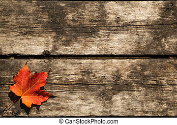 Red Maple Leaf Background