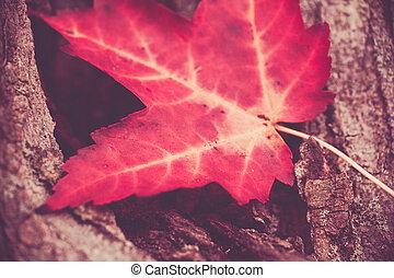 Red Maple Leaf Closeup