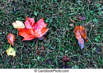 Red maple leaf on green grass, blurred background