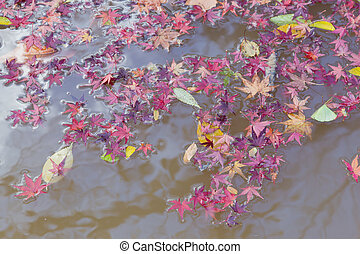 Red maple leaves falling on water