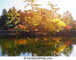 red maple leaves in Japanese autumn season.