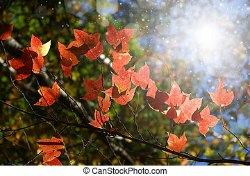 Red maple leaves in the autumn.