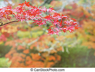 red maple leaves on blurred autumn background