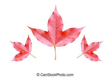 Red maple leaves on stone moss