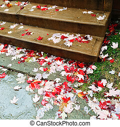 Red maple leaves on stone steps