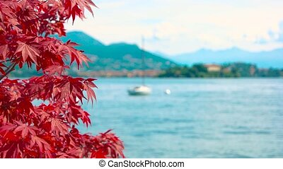 Red maple leaves, scenic landscape.