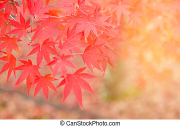 Red maple leaves with blurred background
