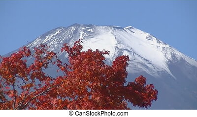 Red maple on the background of Mount Fuji in Japan