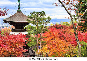 Red maple trees in a japanese garden