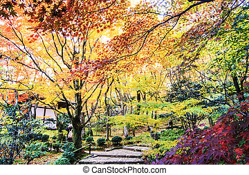 Red maple trees in a japanese garden for adv or others purpose use