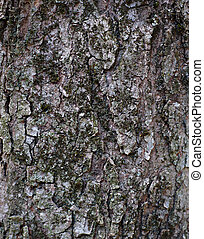 Red Maple Trunk Bark