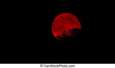 Red Moon Behind Tree Tops