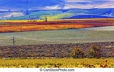Red Mountain Autumn Colorful Vineyards Benton City ...