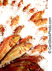 Red Mullet Fishes