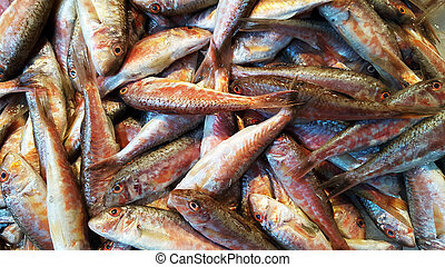 Red mullets fish