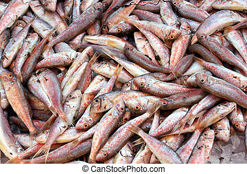 red mullets in local fish