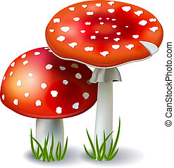 Red Mushroom Amanita with grass isolated on white background