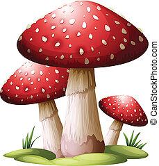 Red mushroom - Illustration of a red mushroom on a white...