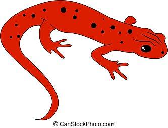 Red newt, illustration, vector on white background.