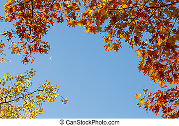 Red oak branches with autumn leaves against sky with moon