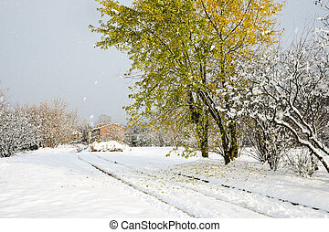 Red Oak tree with fallen leaves on snow and snowing