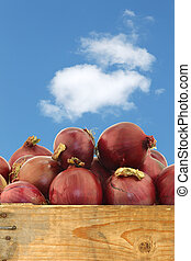 red onions in a wooden crate