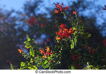 red orange flowers against the blue sky