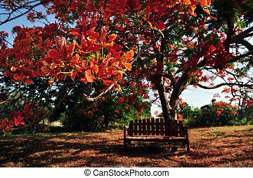 Red Orange Frangipani Temple Tree - Red and Orange flowers...